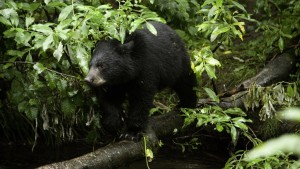 Black-Bear-Moraine-Ecology-Trail
