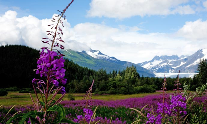 Alaska Tours and Excursions Guide